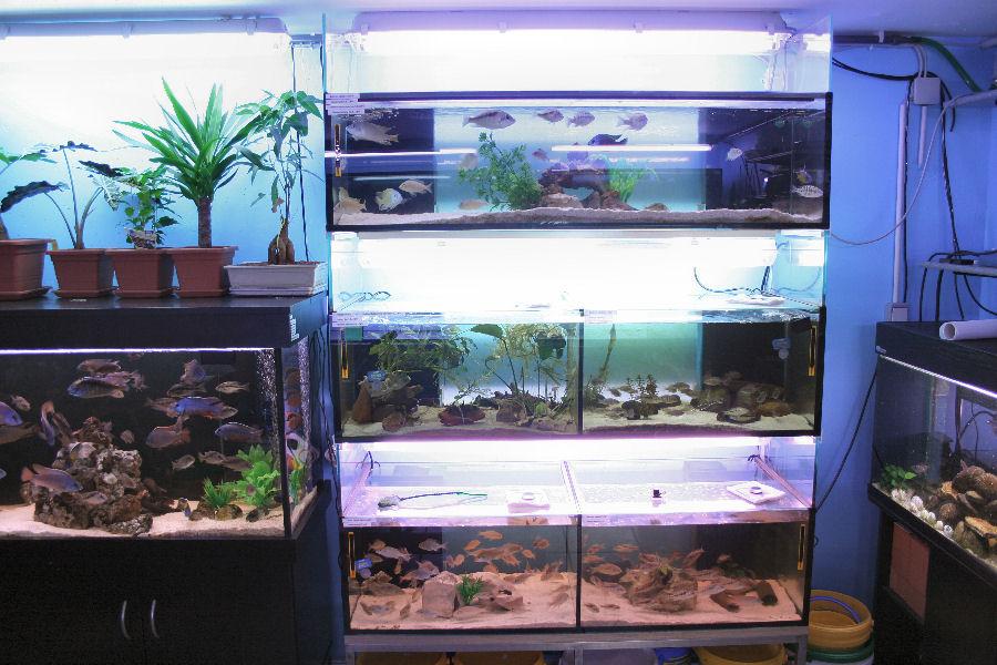 aquarienkeller malawi welt. Black Bedroom Furniture Sets. Home Design Ideas
